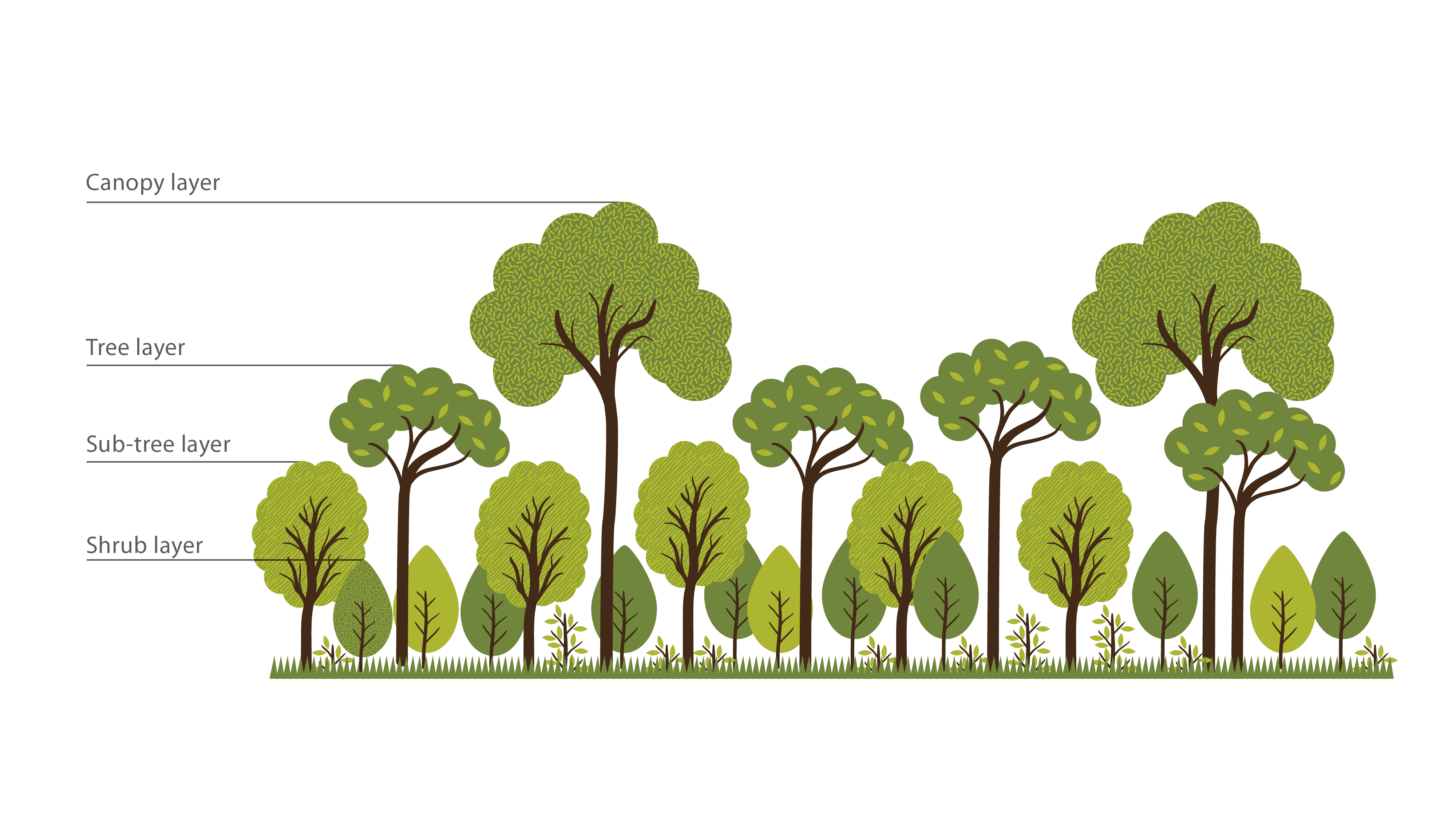 multi layer forests Stand development and growth in uneven-aged norway spruce and multi-layered scots pine forests in boreal sweden.